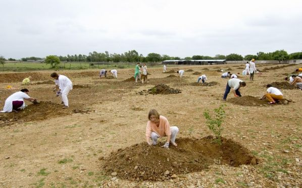 reforestation-2